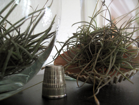 airplants1.jpg